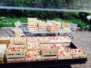 Æbler i kassevis